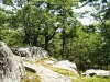 MLS® 20090235 Sans Souci Property Sold By Rick Hill: Facing Flagstone Path With Granite Boulder And Forest