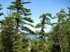 MLS® 20090235 Sans Souci Property Sold By Rick Hill: Facing Georgian Bay Through Forest