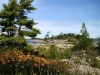 MLS® 20101311 Sans Souci Georgian Bay Island For Sale: Windswept Pines Of The Canadian Shield